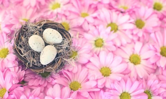 Pink flowers and birds nest
